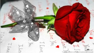 red rose on card