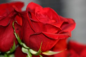 Why do we celebrate valentines day with roses sunflowers florist red rose mightylinksfo