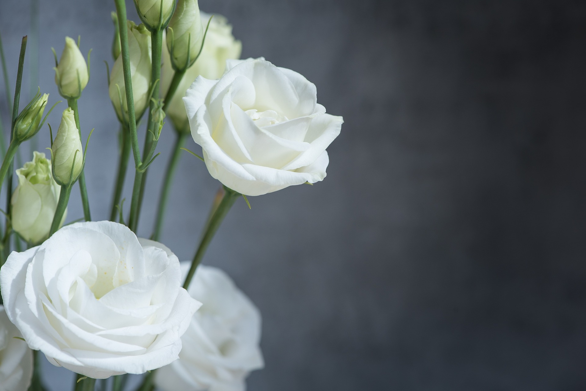 The Beauty of the Lisianthus Flowers